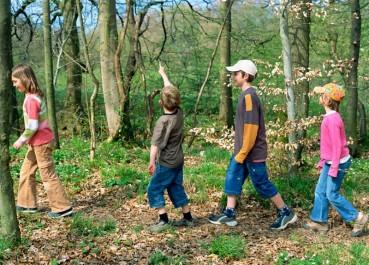 paseo-bosque